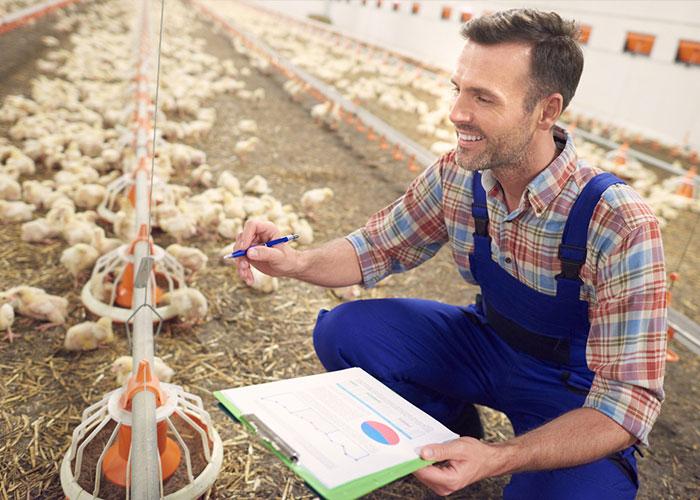 Bien-choisir-sa-viande-de-volaille-à-Alès